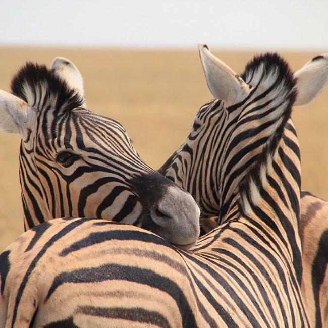 Viaje a Kenia - Señora Sheldon Agencia de Viajes